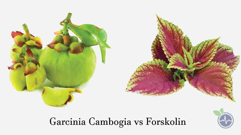 Garcinia Cambogia vs Forskolin